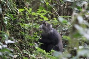 жители тропических джунглей